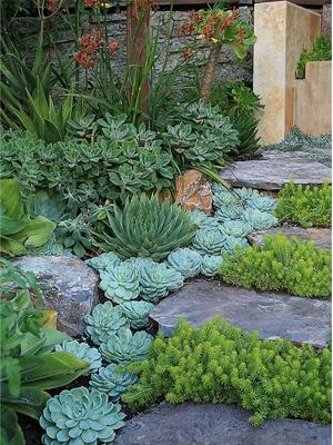 12 maniere om vetplante uit te stal huisgenoot for Klein tuin uitleg