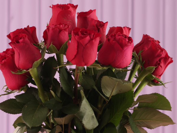 Laat jou rose langer hou met dié geheime resep